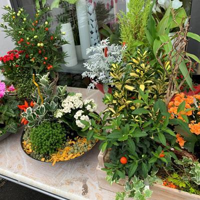 Coupes de plantes à partir de <strong>35€</STRONG>